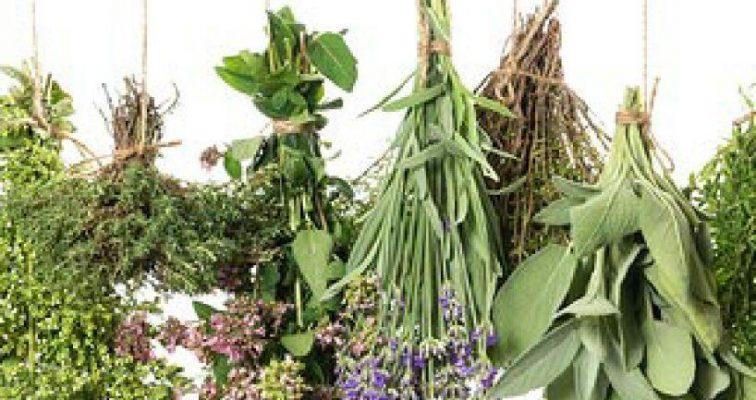 گیاهان ممنوعه در مبتلایان به سرطان