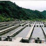 دانلود طرح توجیه فنی ، مالی و اقتصادی پرورش ماهی قزلآلا با ظرفیت ۱۰۰ تن در سـال