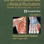 اسکلتی عضلانی نتر - جلد ششم نتر-دانلود کتاب-مجموعه سبز نتر